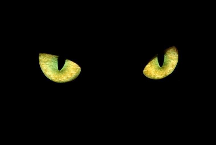 Crni maca amateri